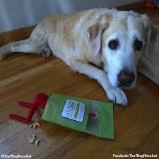 on the shelf pets dogs vs on the shelf surf dog ricochet the surfice dog