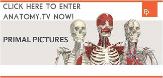 Interactive 3d Anatomy About Anatomy Tv How To Use Anatomy Tv Utep Library Research