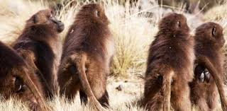 human origins primate evolution proprofs quiz