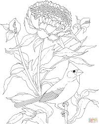 peony coloring pages free coloring pages