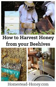 Harvesting Honey From A Top Bar Hive 1468 Best Beekeeping Images On Pinterest Bee Keeping Honey Bees