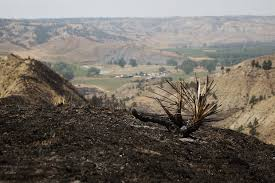 Wildfire Jordan Mt by Donated Feed Crucial To Montana Ranchers U0027 Recovery From Wildfires