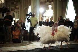 viewfinder thanksgiving turkeys debut in d c pacific standard