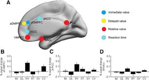 distributed value representation in the medial prefrontal cortex