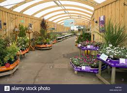 winter garden center display of plants for sale england stock