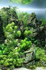 Aga Aquascaping Contest 1723 Best Aquascape Images On Pinterest Aquascaping Nature