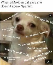 Memes De Chihuahua - los 8 mejores memes del chihuahua enojado cribeo