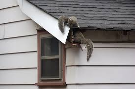 Squirrel In Basement by How To Get Squirrels Out Of The Attic