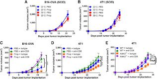 β adrenergic signaling in mice housed at standard temperatures