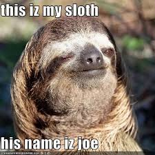 Angry Sloth Meme - 72 best sloths images on pinterest sloth sloths and sloth bear