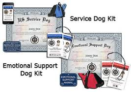 Comfort Dogs Certification Register Your Dog As A Therapy Emotional Support Or Service Dog