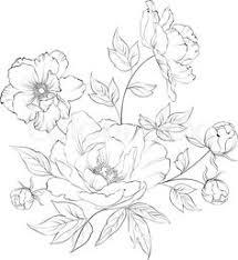 Flower Drawings Black And White - blackandwhite anemones by angela porter art pinterest