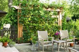 Plants For Pergola by Exploring The Unique Particularities Of Privacy Plants
