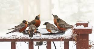 Backyard Wild Birds Wild Birds Winter And Water The Backyard Naturalist