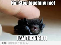 Cute Baby Animal Memes - i am the night funnies pinterest funny animal memes and