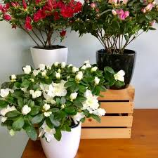 plant delivery cambridge florist flower delivery by coady florist