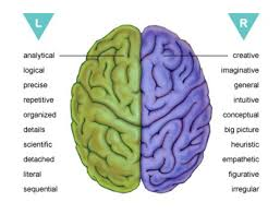 Anatomy Of The Brain And Functions Functions Of A Brain Making Headway Center