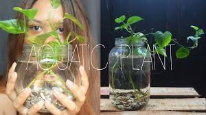 DIY HOME DECOR AQUATIC INDOOR PLANT YouTube - Home decoration plants