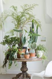 plants for decorating home home design living room with tall silk plants decorating your