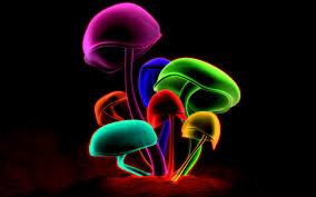 mushrooms wallpaper 809168 colorful loversiq