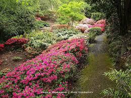 Mt Lofty Botanic Gardens Rhododendron Gully Mt Lofty Botanic Gardens Adelaide