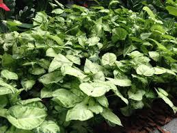 homelife top 15 indoor plants 100 cascading indoor plants shop amazon com artificial