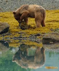bear necessities bear safety colorado wilderness