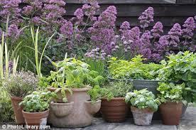 garden design garden design with privacy trees u instead of a