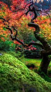 download 1080x1920 japanese garden tree flowers grass