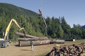 Alaska forest images Alaska timber industry needs increased tongass harvest alaska 50659