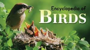 encyclopedia of birds for children learn about birds for kids