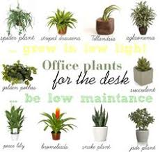 plants for office great fancy design office desk plants beautiful decoration best