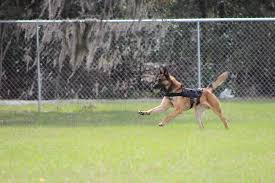 canine crime fighters meet the k 9s of west orange west orange