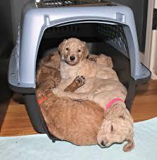 crate training puppy training programs u2014 steel city puppies
