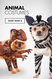 Halloween Costumes Small Dogs Small Dog Halloween Costumes U2013 Festival Collections