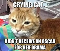 Stupid Cat Meme - crying cat is bringing emo back crying cat quickmeme