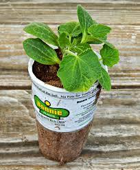 Soil Mix For Container Gardening - how to plant a vegetable container garden this ole mom