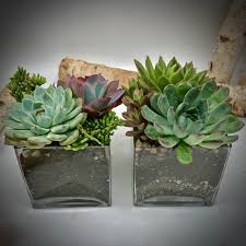Square Glass Vase Succulents 5