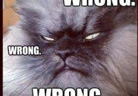 Colonel Meow Memes - nice colonel meow memes colonel meow 80 skiparty wallpaper