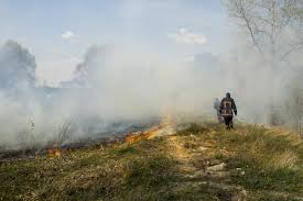 Wildfire Weed by California Wildfires Can Burning Marijuana Fields Get You High