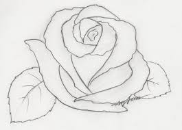 252 best drawing roses images on pinterest drawings rose