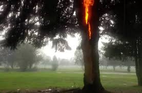 electricity tree vs lightning rod why does one burn and the