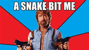 Meme Chuck Norris - chuck norris memes are 100x funnier without the bottom caption