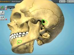 App For Anatomy And Physiology Interactive Bonebox Skull Viewer Anatomy App Youtube