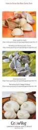 5105 best save kitchen garden ideas images on pinterest veggie