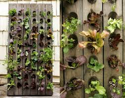 vertical vegetable gardening live to eat