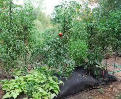 best 25 hay bale gardening ideas on pinterest bales of straw