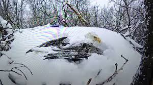 Photos Of Snow Snow Covered Bald Eagle Shakes Snow Off Of Wings Amazing Youtube