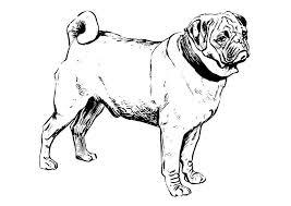 coloriage chien carlin img 22749