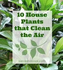 175 best houseplants images on pinterest gardening indoor